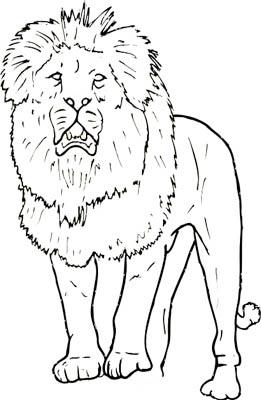 Bilder von löwen zum ausdrucken