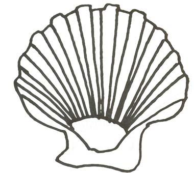 Muschel malvorlage  Muschel Malvorlage - Ausmalbild Muschel