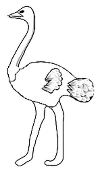Strau Malvorlage - Ausmalbild Vogel Strau
