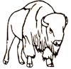 Bison Malvorlage  Ausmalbild Bison kostenlos