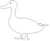 Ente Ausmalbild - kostenlose Zeichenvorlage Ente