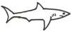 Hai Malvorlage - Ausmalbild Hai zum Ausmalen