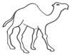 Malvorlage Kamel oder Dromedar - Kamelbild zum Ausmalen