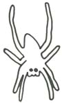 Spinne Malvorlage - Spinnenbild zum Ausdrucken
