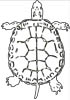 Schildkröte Ausmalbild - kostenlose Malvorlage Riesenschildkröte