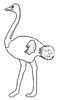 Strauß Malvorlage - Ausmalbild Vogel Strauß