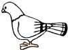 Taube Malvorlage - Ausmalbild zum Ausdrucken